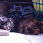 2008-06-20-cardboardpillow