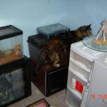 2011-03-17-wtfcat
