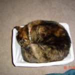2011-04-21-bigcatsmallbasket